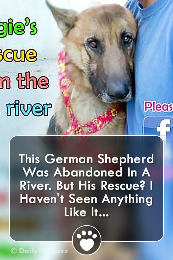 This German Shepherd Was Abandoned In A River. But His Rescue? I Haven\'t Seen Anything Like It...
