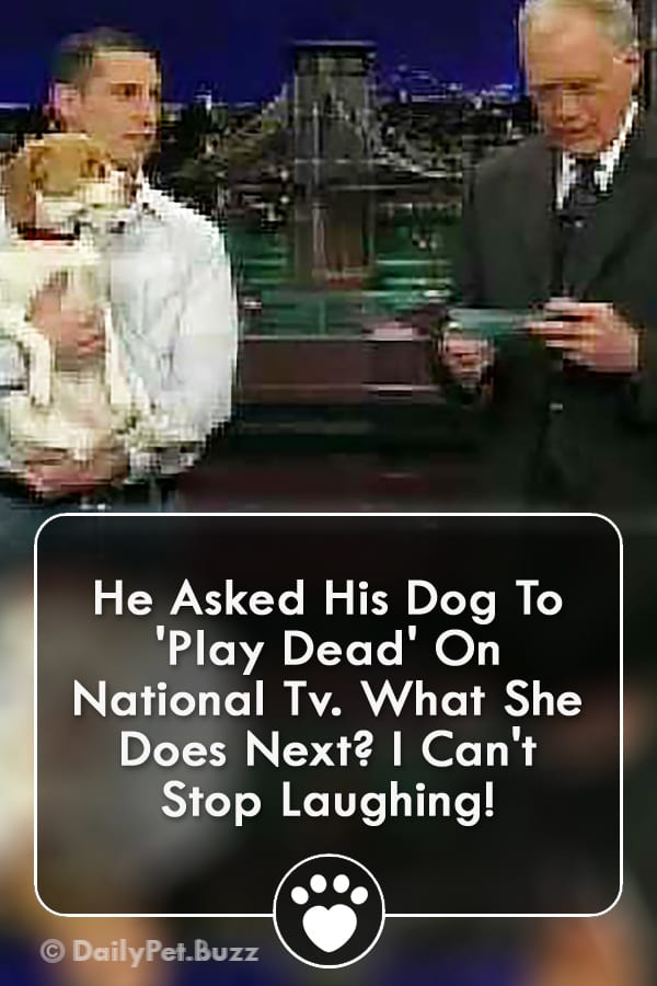 He Asked His Dog To \'Play Dead\' On National Tv. What She Does Next? I Can\'t Stop Laughing!