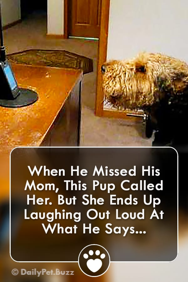 When He Missed His Mom, This Pup Called Her. But She Ends Up Laughing Out Loud At What He Says...