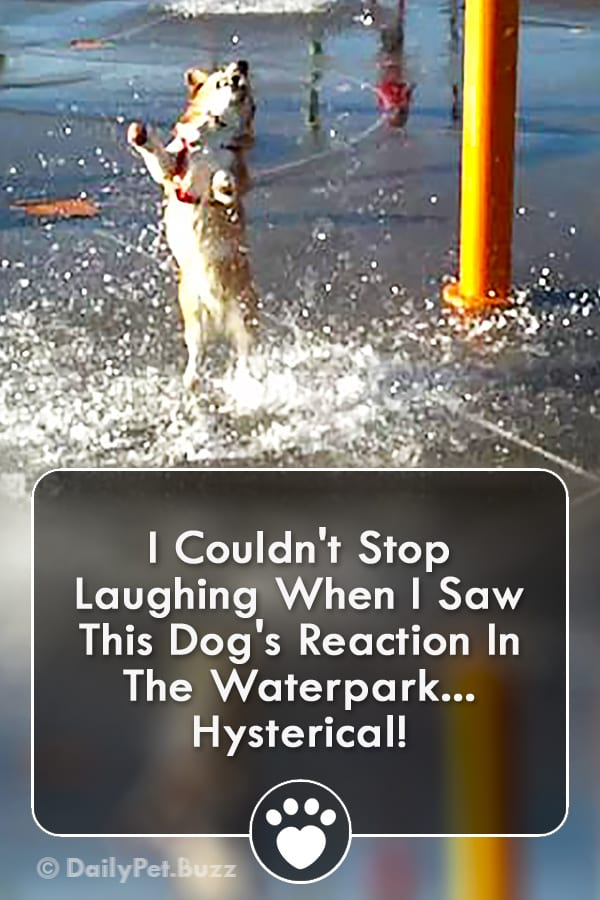 I Couldn\'t Stop Laughing When I Saw This Dog\'s Reaction In The Waterpark... Hysterical!