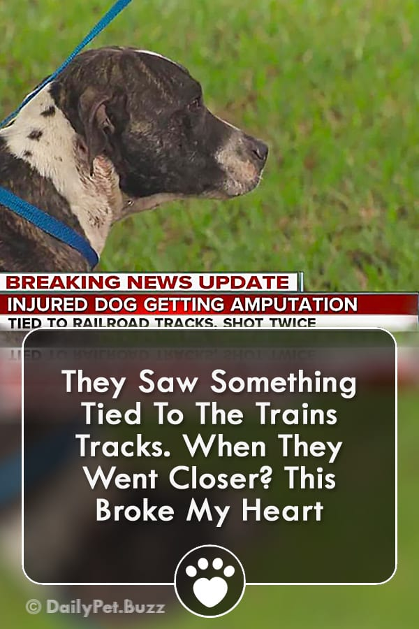 They Saw Something Tied To The Trains Tracks. When They Went Closer? This Broke My Heart