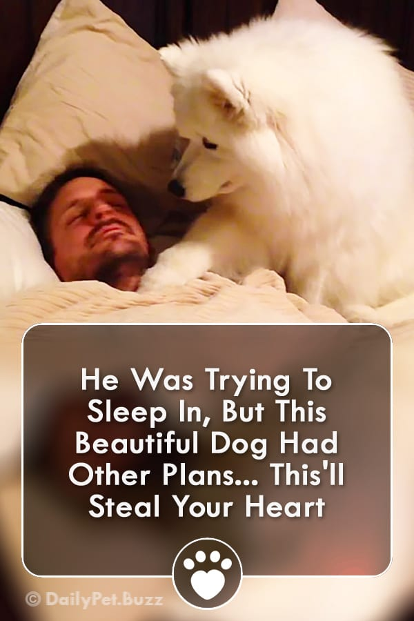 He Was Trying To Sleep In, But This Beautiful Dog Had Other Plans... This\'ll Steal Your Heart