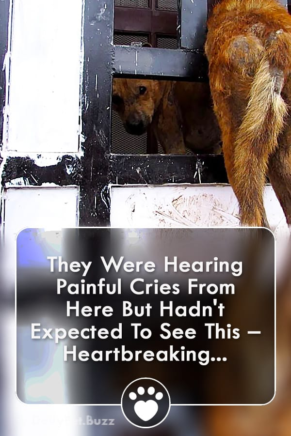 They Were Hearing Painful Cries From Here But Hadn\'t Expected To See This – Heartbreaking...