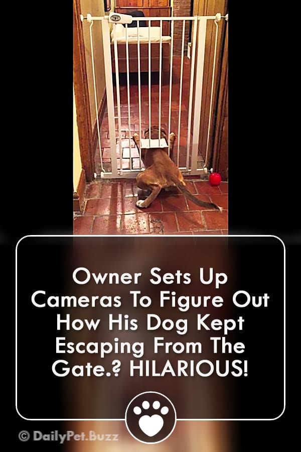 Owner Sets Up Cameras To Figure Out How His Dog Kept Escaping From The Gate? HILARIOUS!