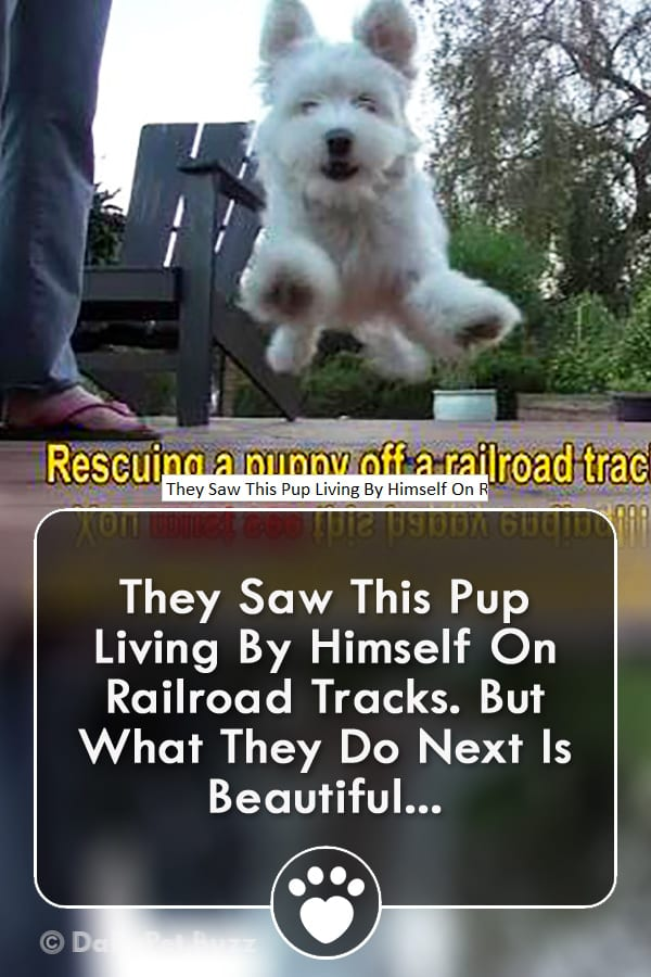 They Saw This Pup Living By Himself On Railroad Tracks. But What They Do Next Is Beautiful...