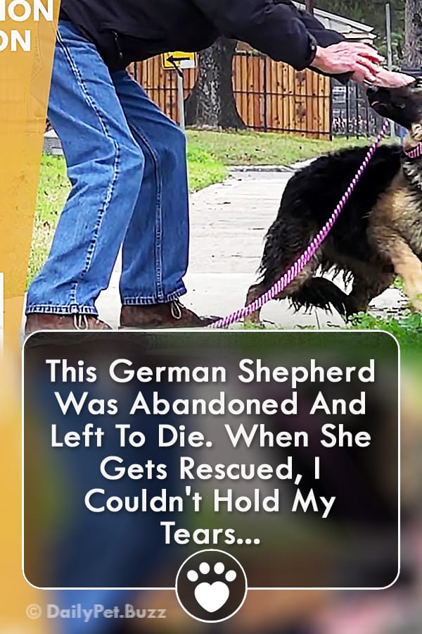 This German Shepherd Was Abandoned And Left To Die. When She Gets Rescued, I Couldn\'t Hold My Tears...