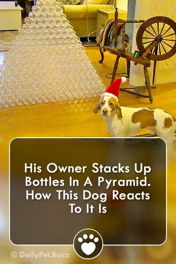 His Owner Stacks Up Bottles In A Pyramid. How This Dog Reacts To It Is
