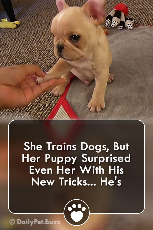 She Trains Dogs, But Her Puppy Surprised Even Her With His New Trick!