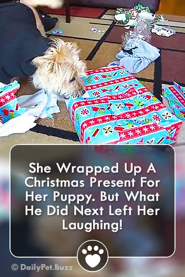She Wrapped Up A Christmas Present For Her Puppy. But What He Did Next Left Her Laughing!