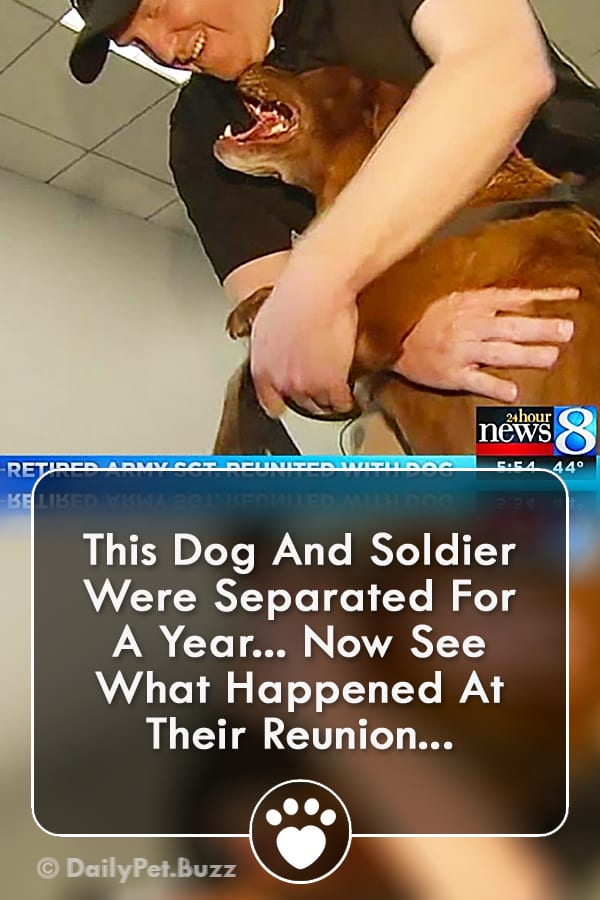 This Dog And Soldier Were Separated For A Year... Now See What Happened At Their Reunion...