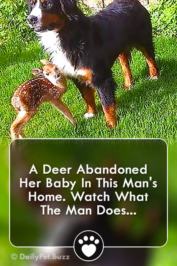 A Deer Abandoned Her Baby In This Man\'s Home. Watch What The Man Does...