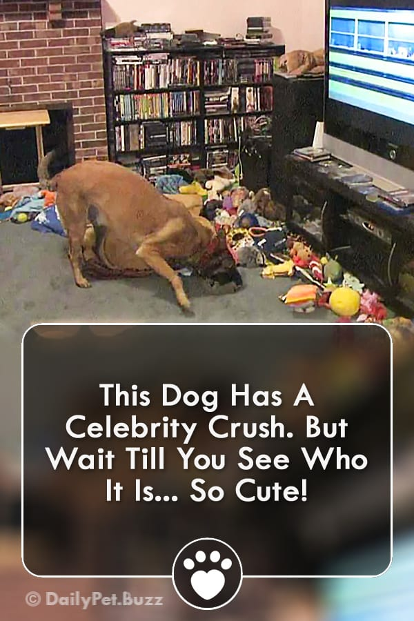 This Dog Has A Celebrity Crush. But Wait Till You See Who It Is... So Cute!