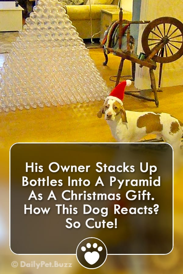 His Owner Stacks Up Bottles Into A Pyramid As A Christmas Gift. How This Dog Reacts? So Cute!