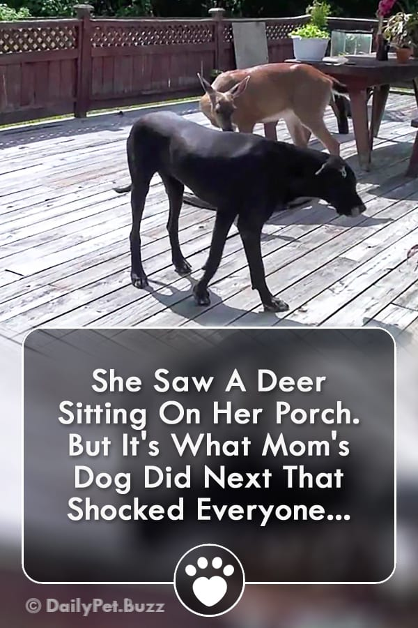 She Saw A Deer Sitting On Her Porch. But It\'s What Mom\'s Dog Did Next That Shocked Everyone...