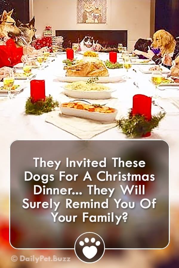 They Invited These Dogs For A Christmas Dinner... They Will Surely Remind You Of Your Family?
