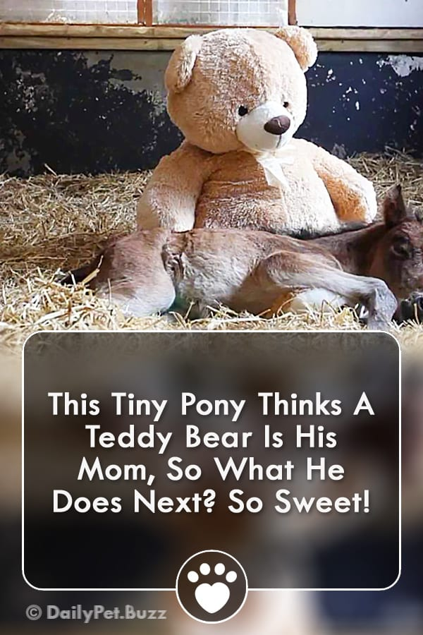 This Tiny Pony Thinks A Teddy Bear Is His Mom, So What He Does Next? So Sweet!