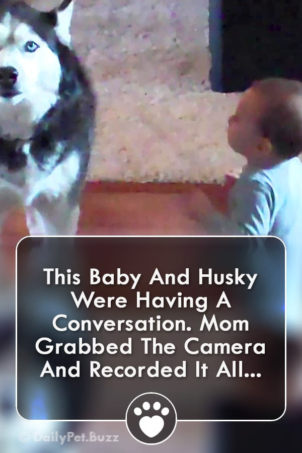 This Baby And Husky Were Having A Conversation. Mom Grabbed The Camera And Recorded It All...