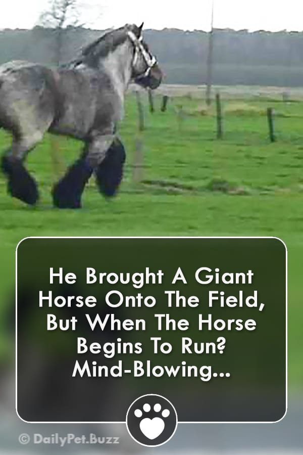 He Brought A Giant Horse Onto The Field, But When The Horse Begins To Run? Mind-Blowing...
