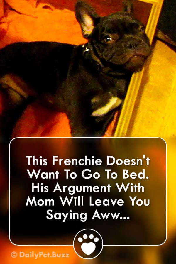 This Frenchie Doesn\'t Want To Go To Bed. His Argument With Mom Will Leave You Saying Aww...