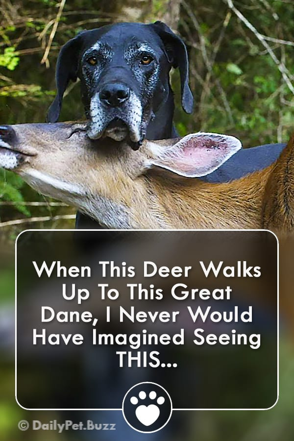 When This Deer Walks Up To This Great Dane, I Never Would Have Imagined Seeing THIS...