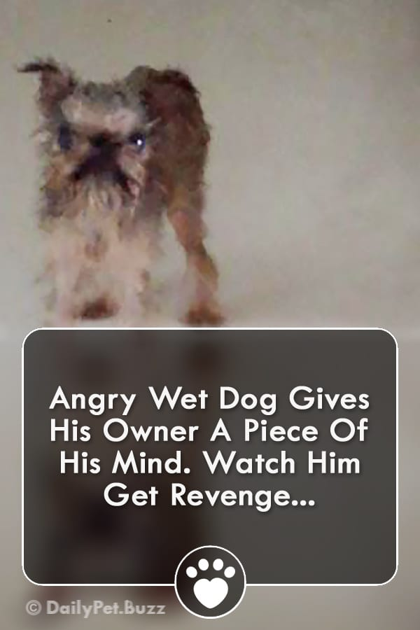 Angry Wet Dog Gives His Owner A Piece Of His Mind. Watch Him Get Revenge...