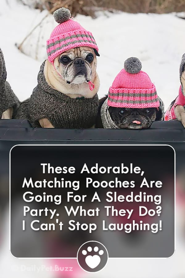 These Adorable, Matching Pooches Are Going For A Sledding Party. What They Do? I Can\'t Stop Laughing!