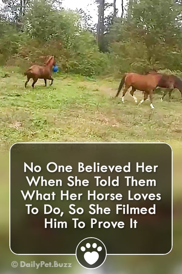 No One Believed Her When She Told Them What Her Horse Loves To Do, So She Filmed Him To Prove It