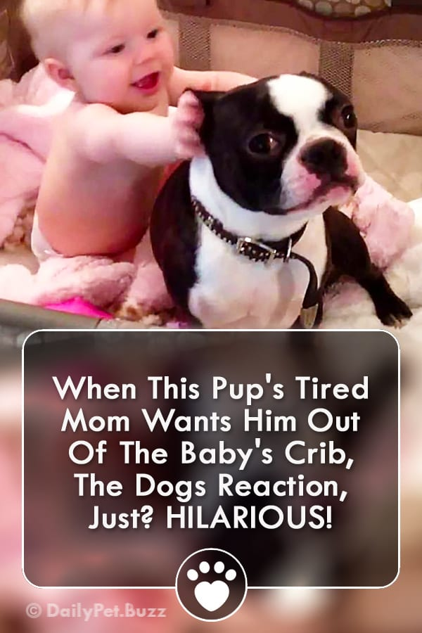 When This Pup\'s Tired Mom Wants Him Out Of The Baby\'s Crib, The Dogs Reaction, Just? HILARIOUS!