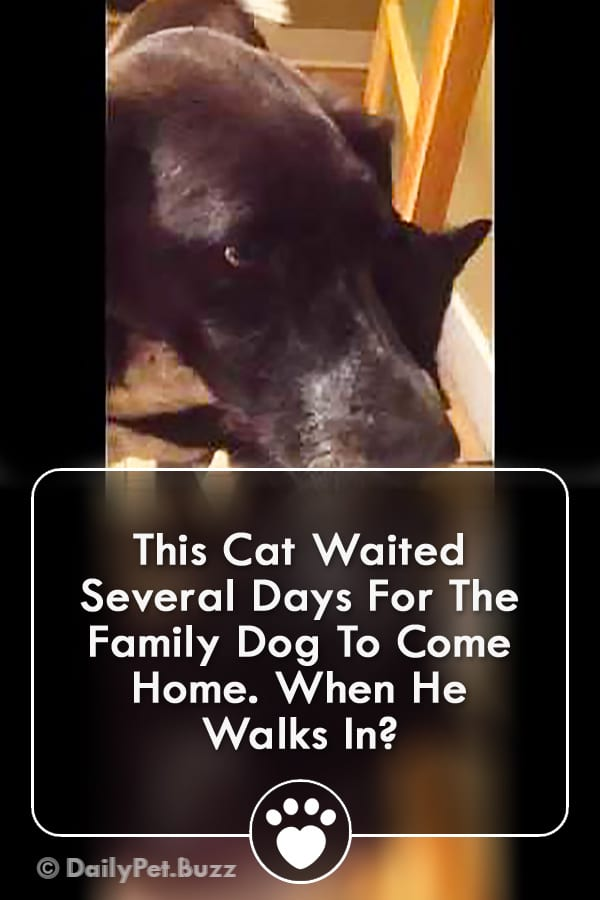 This Cat Waited Several Days For The Family Dog To Come Home. When He Walks In?