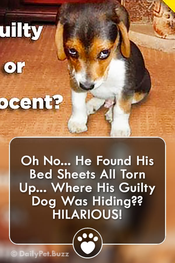 Oh No... He Found His Bed Sheets All Torn Up... Where His Guilty Dog Was Hiding?? HILARIOUS!