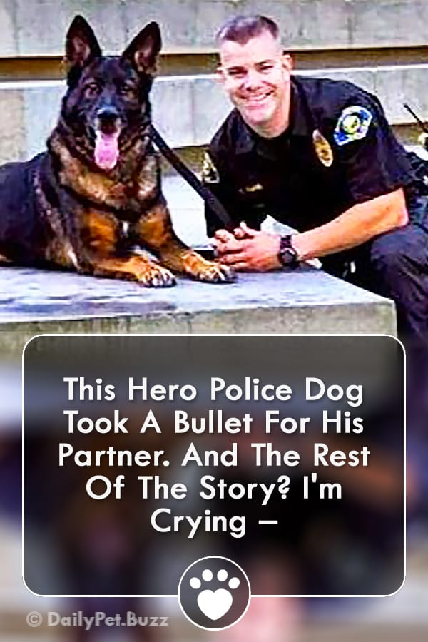 This Hero Police Dog Took A Bullet For His Partner. And The Rest Of The Story? I\'m Crying –