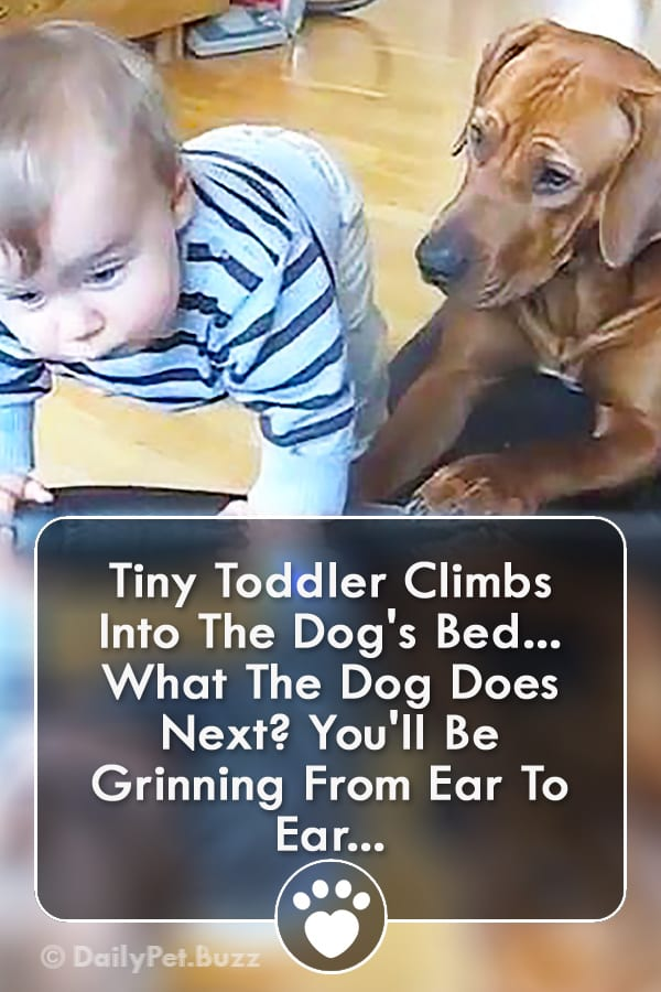 Tiny Toddler Climbs Into The Dog\'s Bed... What The Dog Does Next? You\'ll Be Grinning From Ear To Ear...