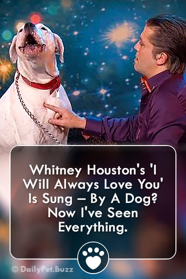 Whitney Houston\'s \'I Will Always Love You\' Is Sung – By A Dog? Now I\'ve Seen Everything.