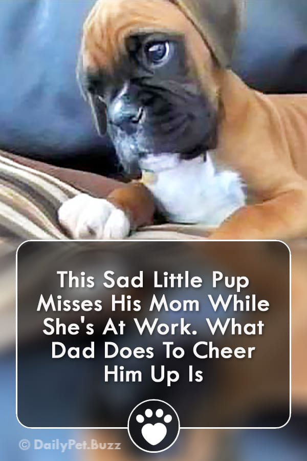 This Sad Little Pup Misses His Mom While She\'s At Work. What Dad Does To Cheer Him Up Is