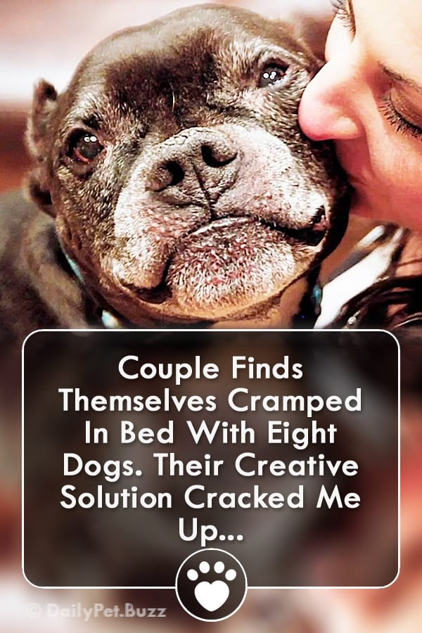 Couple Finds Themselves Cramped In Bed With Eight Dogs. Their Creative Solution Cracked Me Up...