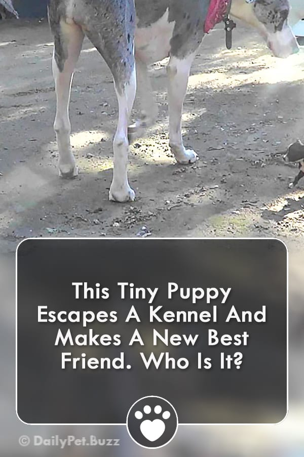 This Tiny Puppy Escapes A Kennel And Makes A New Best Friend. Who Is It?