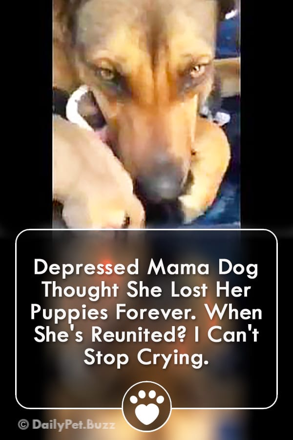 Depressed Mama Dog Thought She Lost Her Puppies Forever. When She\'s Reunited? I Can\'t Stop Crying.