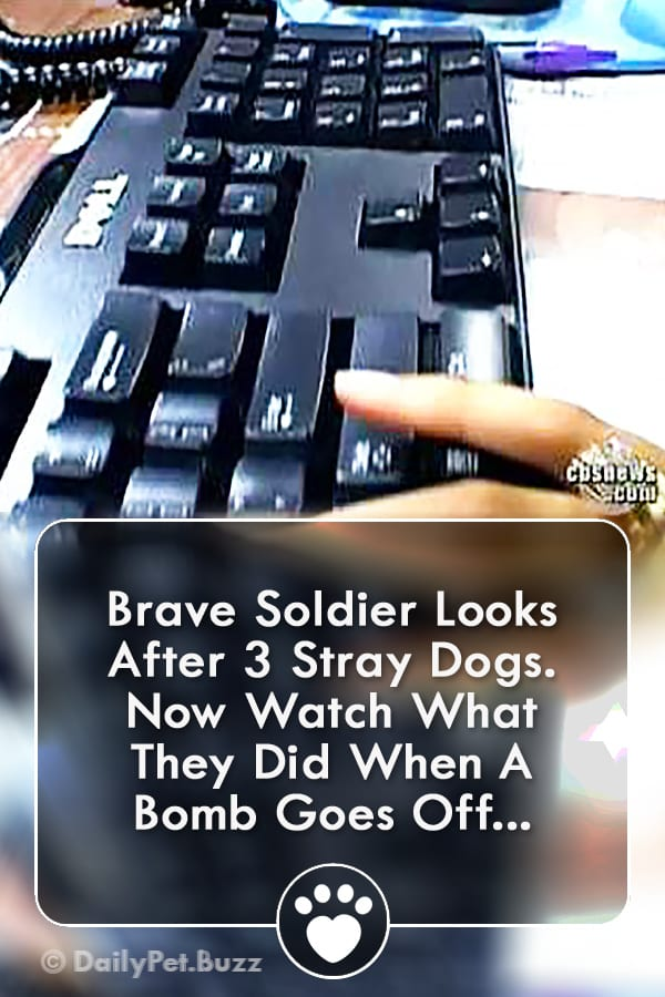 Brave Soldier Looks After 3 Stray Dogs. Now Watch What They Did When A Bomb Goes Off...