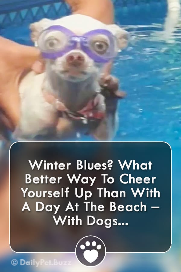 Winter Blues? What Better Way To Cheer Yourself Up Than With A Day At The Beach – With Dogs...