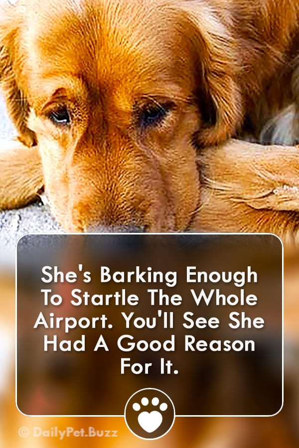 She\'s Barking Enough To Startle The Whole Airport. You\'ll See She Had A Good Reason For It.