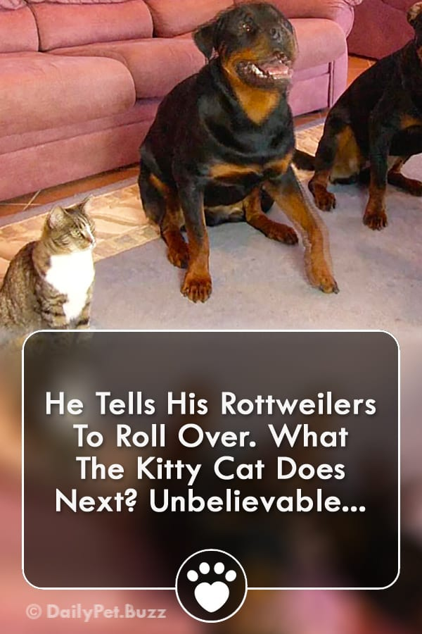 He Tells His Rottweilers To Roll Over. What The Kitty Cat Does Next? Unbelievable...