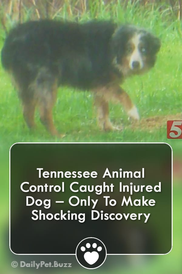 Tennessee Animal Control Caught Injured Dog – Only To Make Shocking Discovery