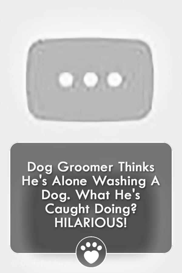 Dog Groomer Thinks He\'s Alone Washing A Dog. What He\'s Caught Doing? HILARIOUS!