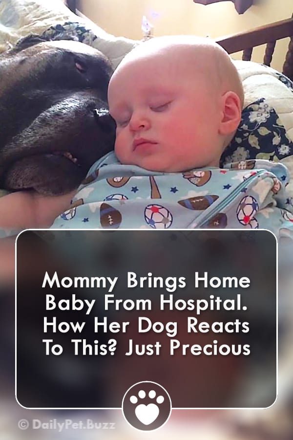 Mommy Brings Home Baby From Hospital. How Her Dog Reacts To This? Just Precious