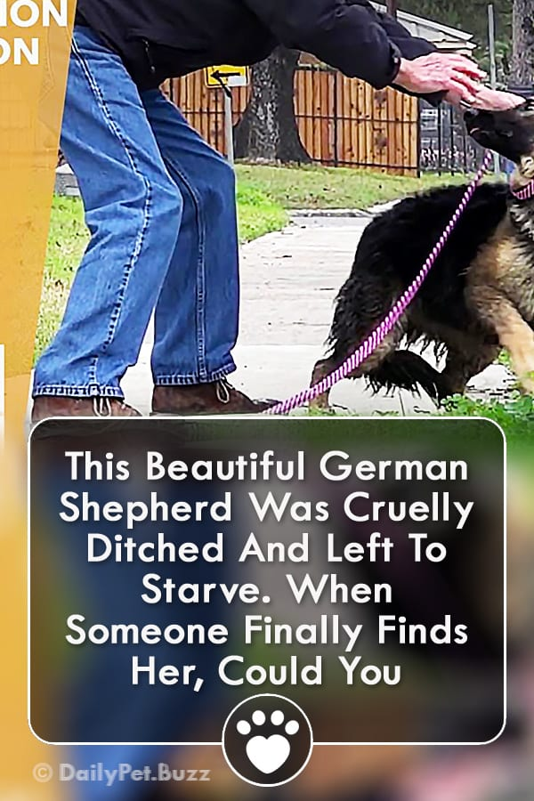 This Beautiful German Shepherd Was Cruelly Ditched And Left To Starve. When Someone Finally Finds Her, Could You Imagine? This Left Me Too Emotional...