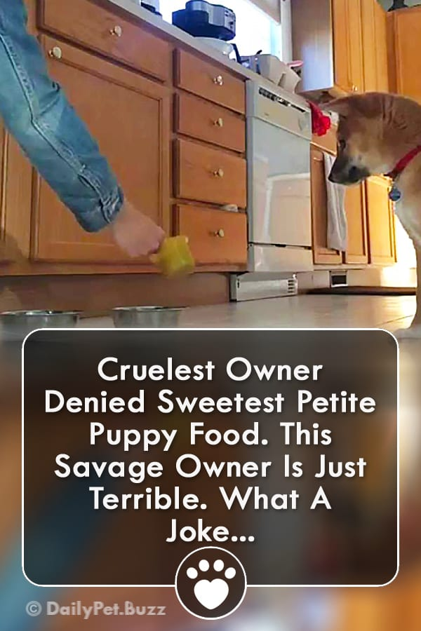 Cruelest Owner Denied Sweetest Petite Puppy Food. This Savage Owner Is Just Terrible. What A Joke...