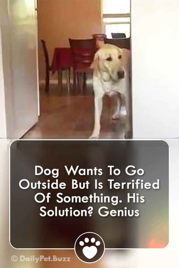 Dog Wants To Go Outside But Is Terrified Of Something. His Solution? Genius