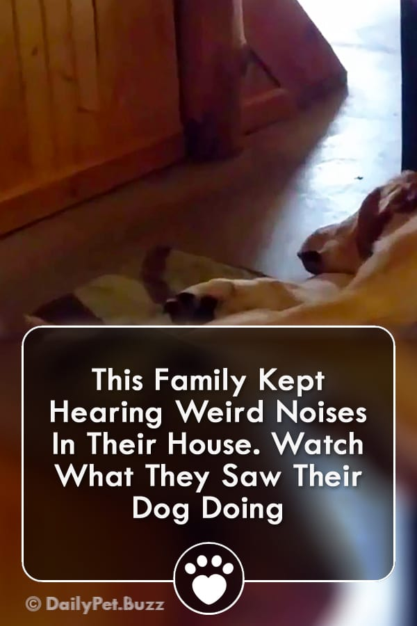 This Family Kept Hearing Weird Noises In Their House. Watch What They Saw Their Dog Doing