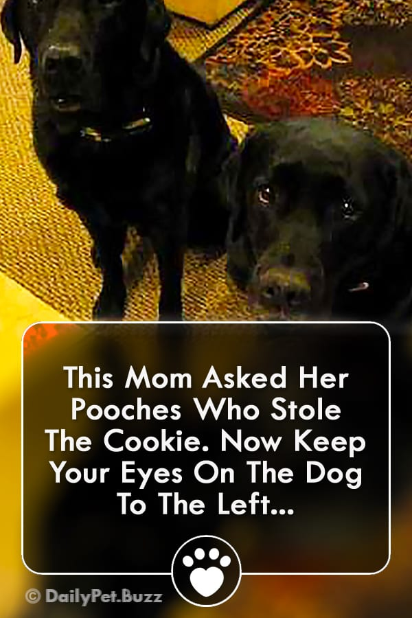 This Mom Asked Her Pooches Who Stole The Cookie. Now Keep Your Eyes On The Dog To The Left...