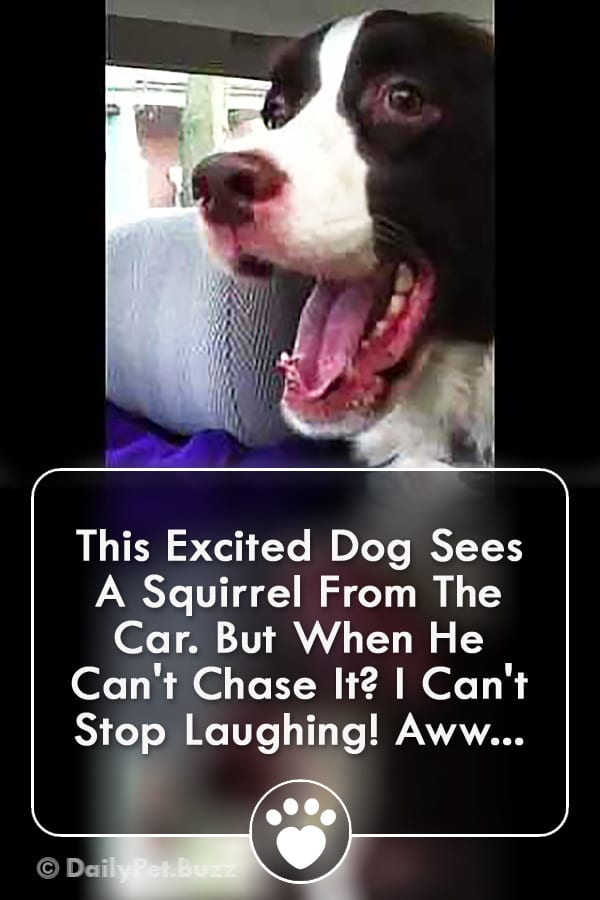 This Excited Dog Sees A Squirrel From The Car. But When He Can\'t Chase It? I Can\'t Stop Laughing! Aww...